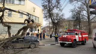 Дерево упало на автомобиль в Туле