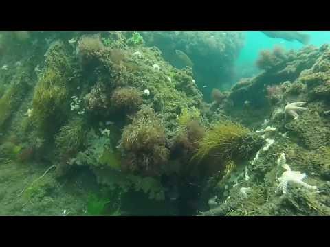 Cape Cod Dive (Sandwich) 6-16-2016