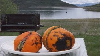 Stef's Making Breakfast - Muffins In Orange Peels?!