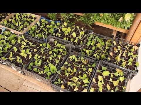 Черенкуем всё сподряд! Черенкам холодно Затопили Теплицу. Обзор растений в теплице на 14.09.20.