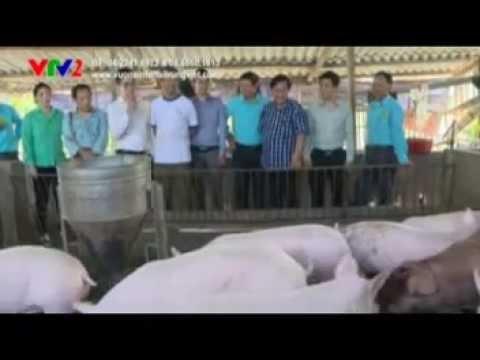 Mô hình chăn nuôi lợn nái + lợn thit
