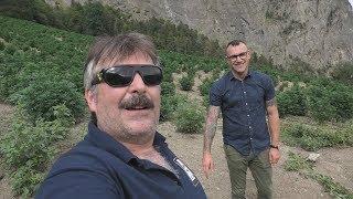 CompanyX Outdoor CBD Grow in the Swiss Alps