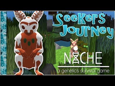 The Patterned Path to Northern Islands!! • Niche: Seeker's Journey - Episode #15