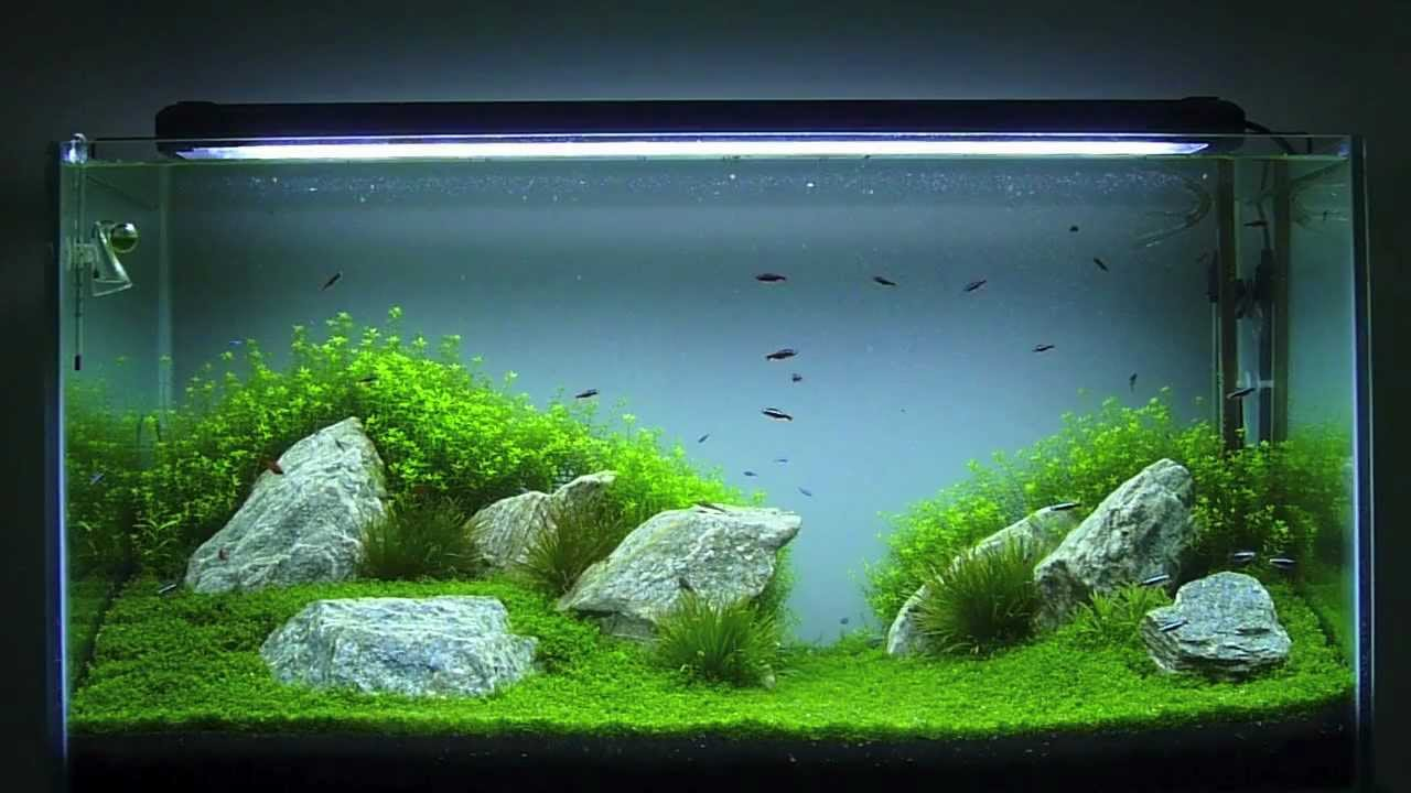 Aquascaping Aqu 225 Rio Plantado 200 Litros Hd Youtube
