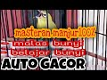 Masteran Manjur Pleci Auto Gacor  Siaran Youtube  Mp3 - Mp4 Download