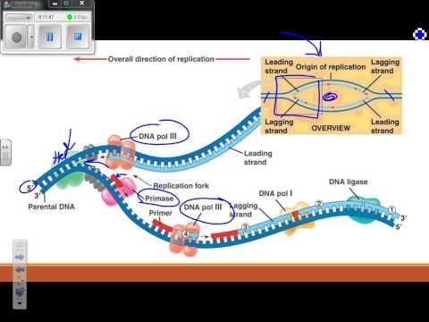 Molecular Genetics Review Video