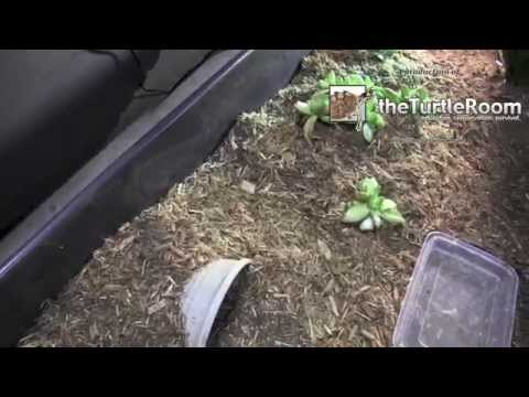 How To Make An Indoor Tortoise Home