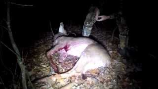 Big Buck Recovered With Blood Tracking Dog