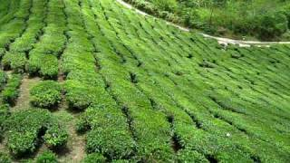 Martyna in Malaysia, Kuala Lumpur, tea farm,