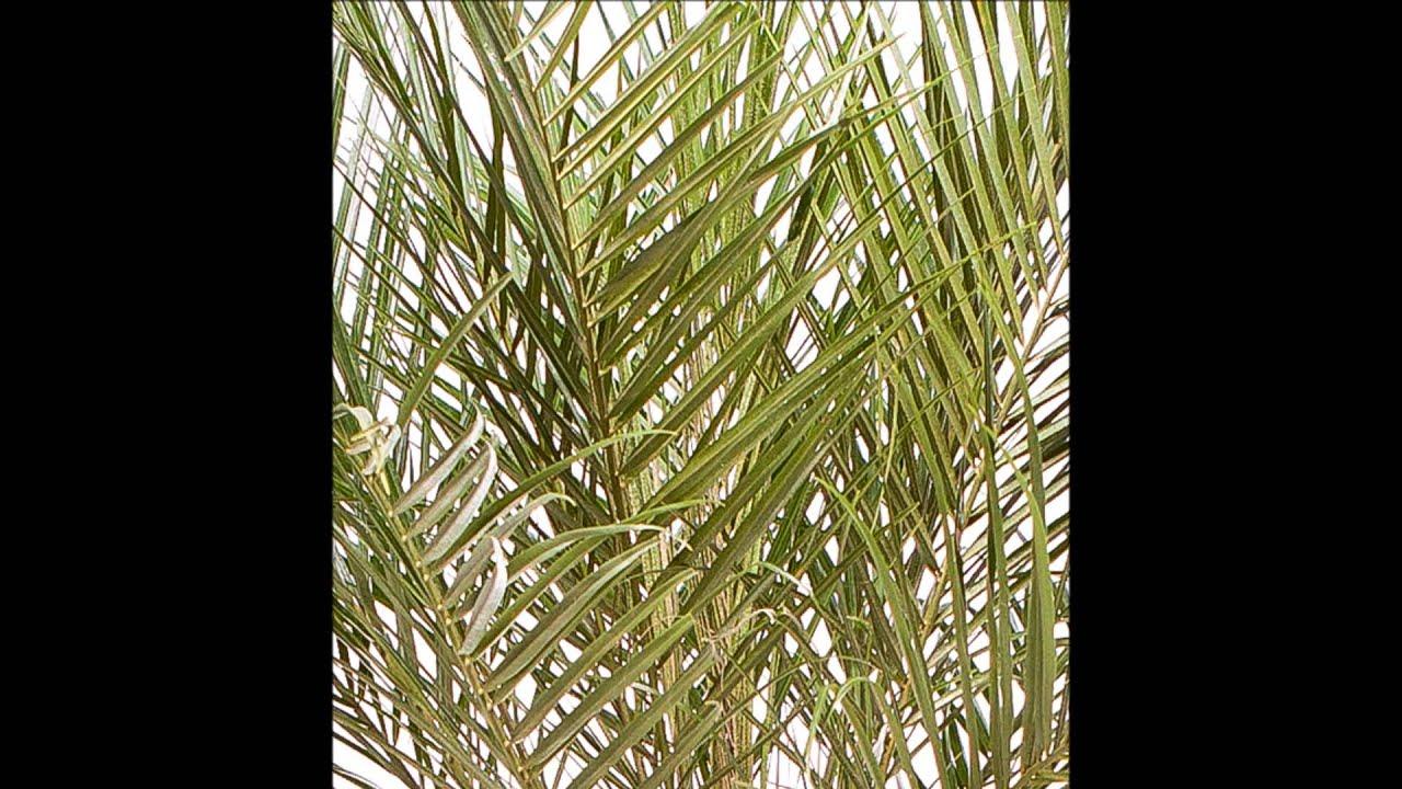 palmier truffaut 59 euros