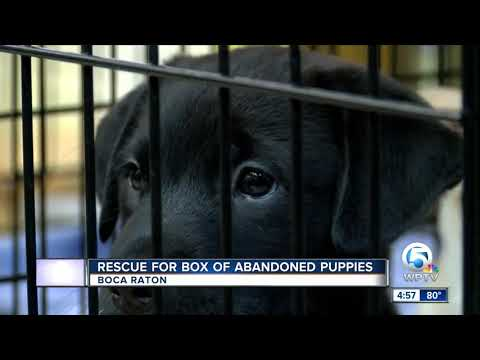 Dogs Abandoned In Broward County, Now Up For Adoption In Boca Raton