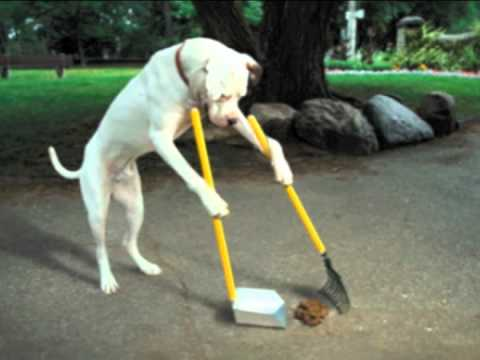 Dog Uses Pooper Scooper To Clean Up Own Mess