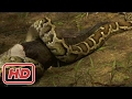 Vengeance of Giant Python Found in Florida National Geographic New Documentary 2017 HD