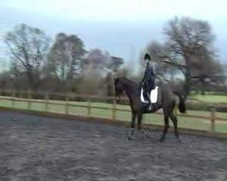 Eventer out of Colin Diamond Part 2