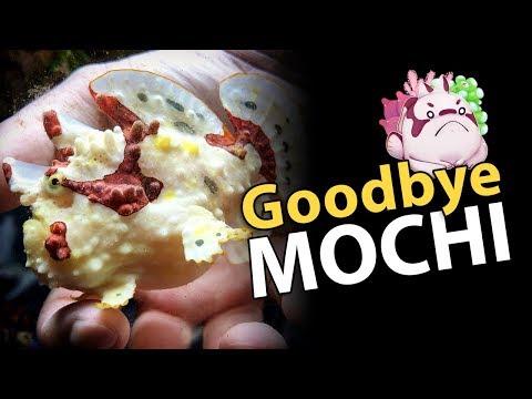 RIP Mochi, Rest Well Little Buddy. =/