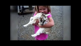 The Cutest Newborn Puppies & Kittens Weekly Compilation 2018 ...