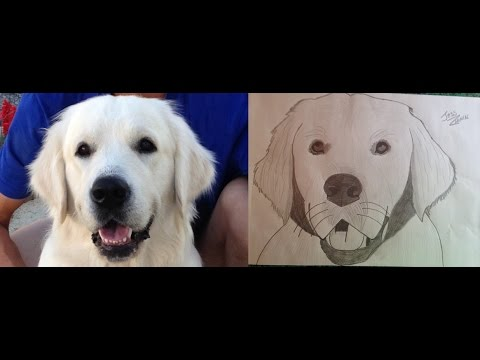 Apprendre à dessiner son chien CRAYON A PAPIER - YouTube