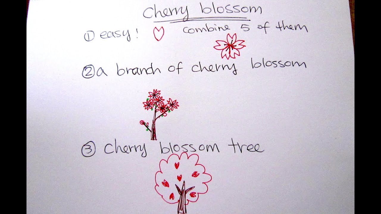 how to draw cherry blossom easy drawing tutorial for beginners