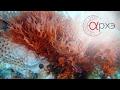 """Андрей Журавлев: """"Как бактерии создали атмосферу и всё прочее [4000-550 млн лет назад]"""""""
