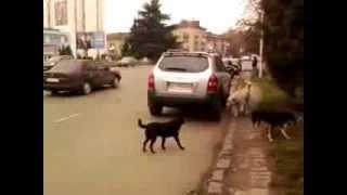 2013 11 13 1 собаки Ужгород