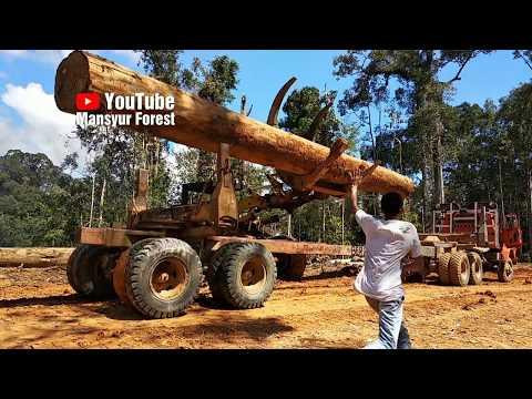 Muat Logs Ke Logging Truck Menggunakan Unit Wheel Loader