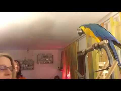 Papageienumschau Jessica Koser Papageientraining