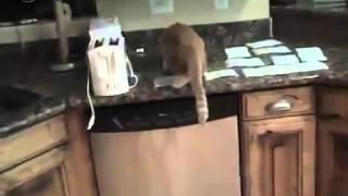 Как сделать чтобы кошка не лазила по столу
