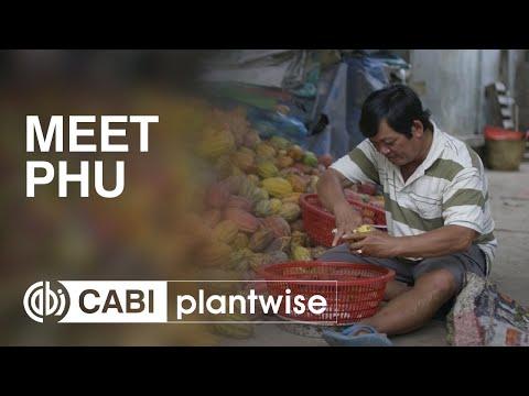 Meet Phu, a Vietnamese cocoa farmer
