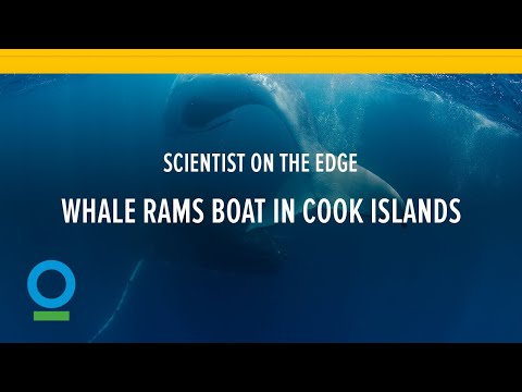 Scientist on the edge: Whale rams boat in Cook Islands | Conservation International (CI)