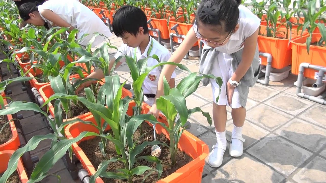 Camõesian Organic Garden (1 minute version) - PLKCTSLPS Campus TV 2014-15 保良局陳守仁小學 - YouTube