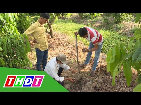 Cải tạo đất vườn kém năng suất | Khuyến nông - 30/3/2021 | THDT