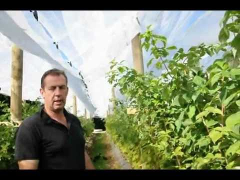 Fruit Farming in the Southern Hemisphere part 1