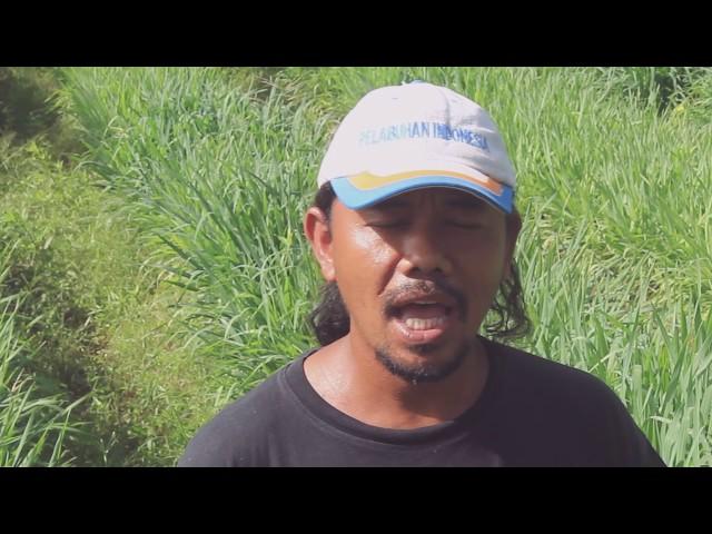 Pertanian Rumput Gajah Matfa Indonesia