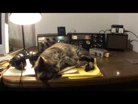 Radio Amateur Cats