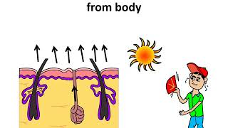 Science - Excretion in humans and animals - Hindi