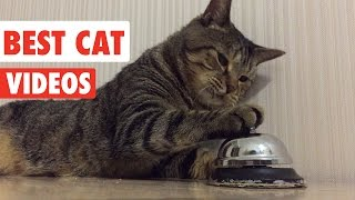 Best Cat Videos Ever | Funny Cat Video Pet Compilation 2017