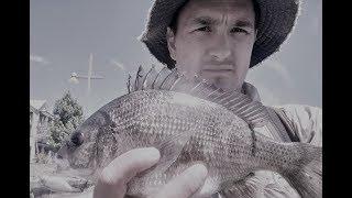 Чорний лящ - Рибалка каналів - Свон-Рівер - Перт, wa