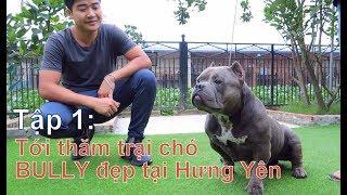T1: Visiting the beautiful BULLY dog farm in Hung Yen / BULLY EXOTIC / NhamTuatTV-Dog in Vietnam