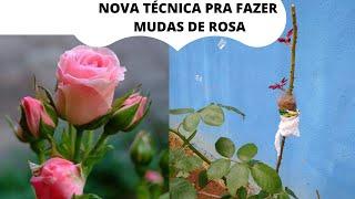 Técnica Para Fazer Muda de Rosas