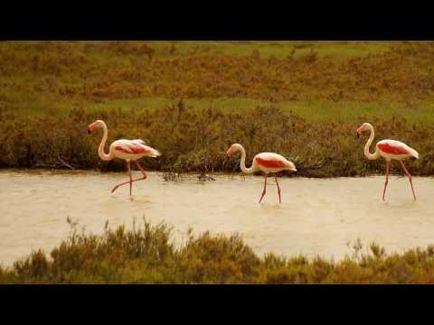 National park Camargue, France