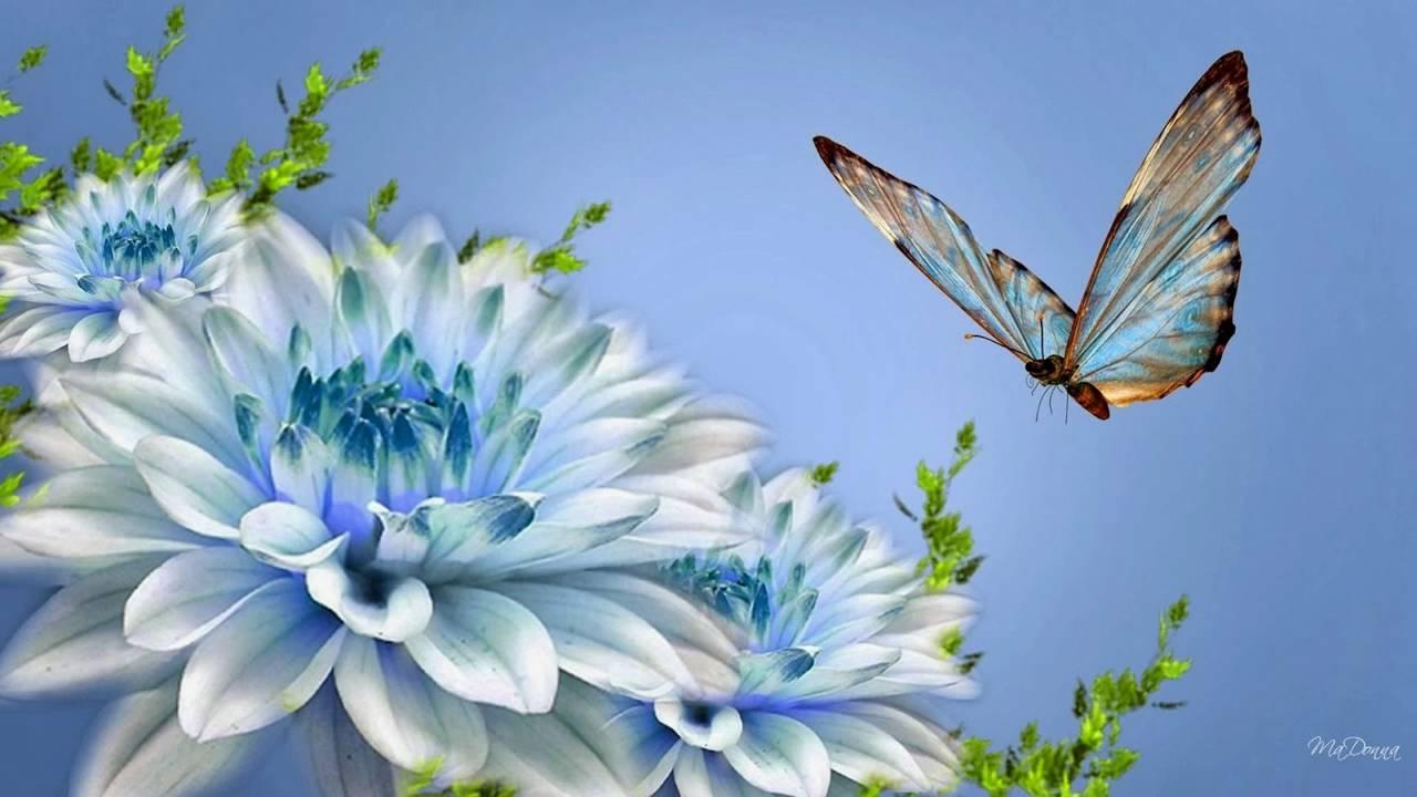 Beautyfull Flower Youtube
