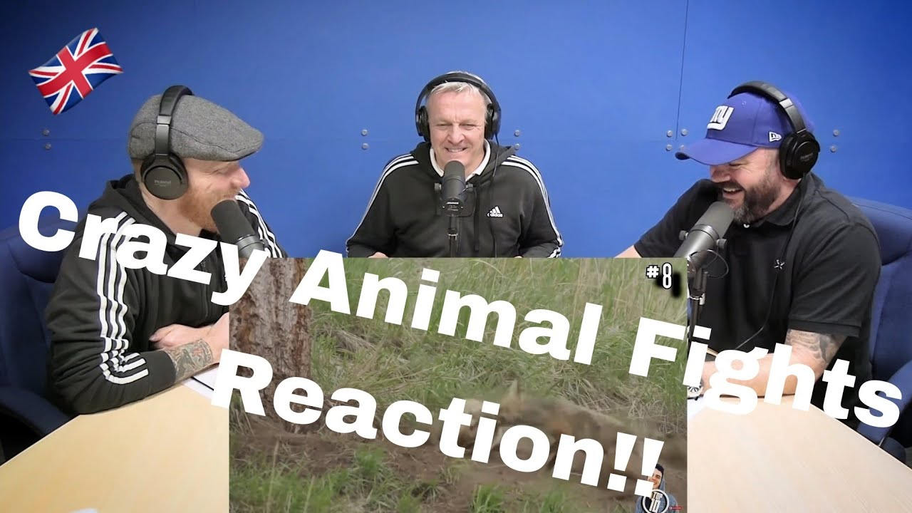 Download 14 CRAZIEST Animal Fights Caught On Camera REACTION!! | OFFICE BLOKES REACT!!