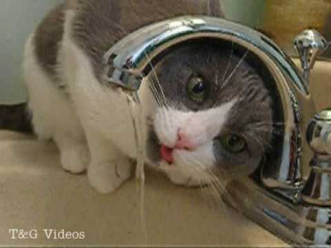 d2fb91fe4f Cat that likes water - YouTube