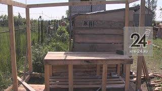 25 собак и 60 кошек, находящихся в мини-приюте «Бездомыши НК», ждут помощи нижнекамцев