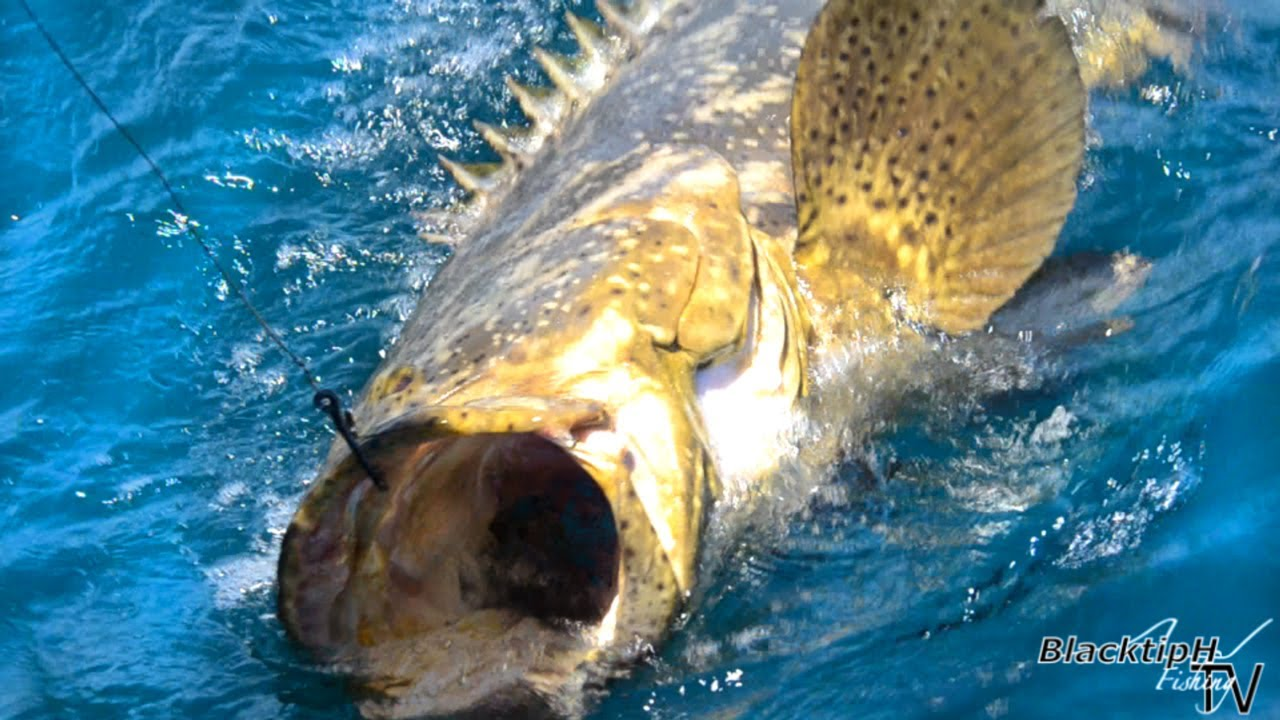 how to catch grouper fish
