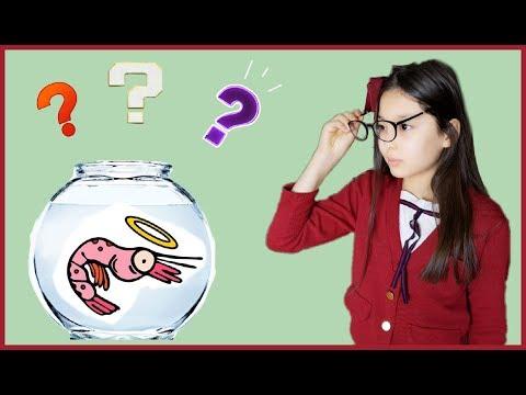 Во что играют корейские дети? Креветочная ферма. 소피야 새우키우기?!)))