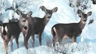 прекрасные моменты дикой природы - времена года