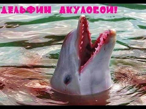 Вопрос: Почему Акулы Боятся Дельфинов?