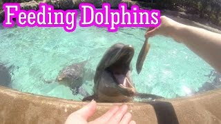 Feeding The Dolphins at SeaWorld Orlando. Dolphin talks. GoPro Dolphin Cove