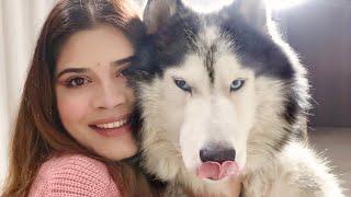 LIFE WITH HUSKIES / LIFE WITH A HUSKY / INDIAN HUSKY / HUSKY INDIA / SWASTI SEMWAL / #huskyindia